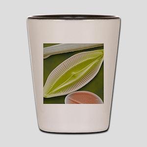 Diatom, SEM Shot Glass