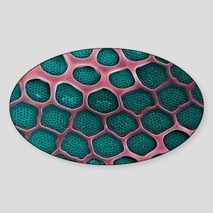 Diatom, SEM Sticker (Oval)