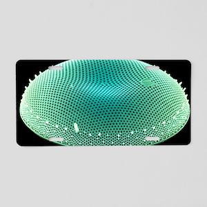 Diatom alga, SEM Aluminum License Plate