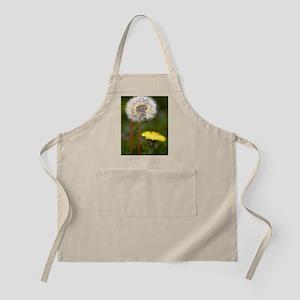 Dandelions (Taraxacum officinale) Apron