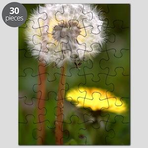 Dandelions (Taraxacum officinale) Puzzle