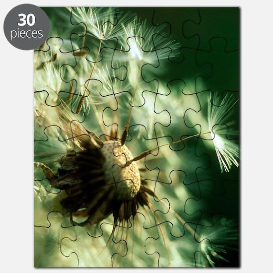 Dandelion clock Puzzle