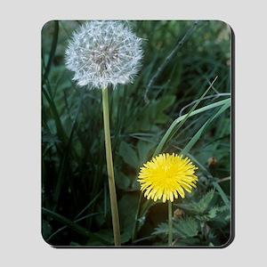 Dandelion (Taraxacum officinale) Mousepad