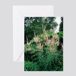 Culver's Root flowers Greeting Card