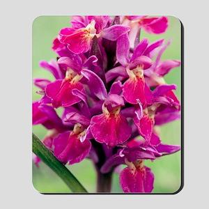 Dactylorhiza sambucina orchid Mousepad