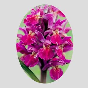Dactylorhiza sambucina orchid Oval Ornament