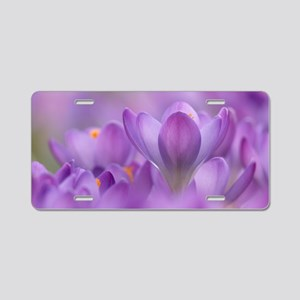 Crocus tommasinianus flower Aluminum License Plate