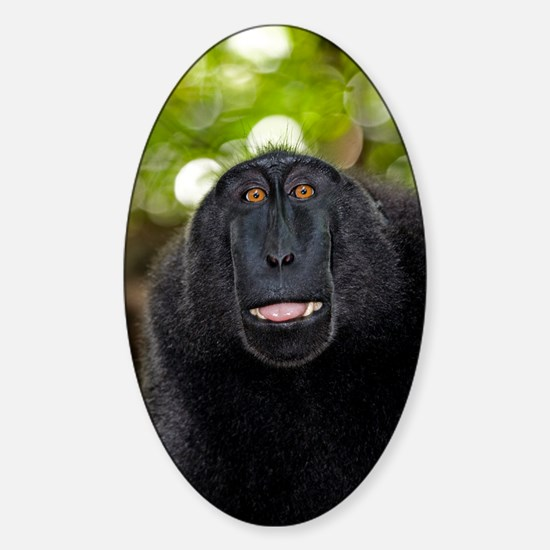 Crested black macaque lipsmacking Sticker (Oval)