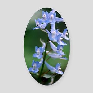 Corydalis flowers (Corydalis ambig Oval Car Magnet
