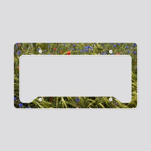 Cornfield meadow in France License Plate Holder