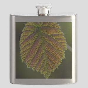 Common hazel leaf Flask