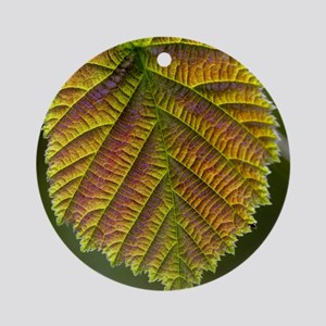 Common hazel leaf Round Ornament