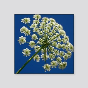 "Common hogweed (Heracleum s Square Sticker 3"" x 3"""
