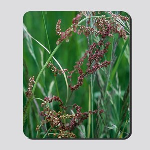 Common sorrel (Rumex acetosa) Mousepad