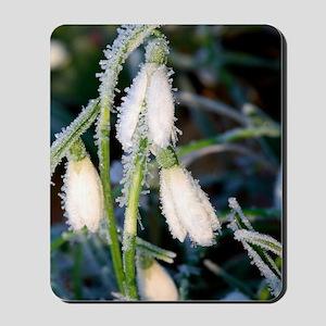 Common snowdrops (Galanthus nivalis) Mousepad