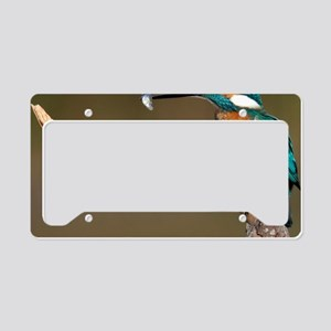 Common Kingfisher feeding on  License Plate Holder