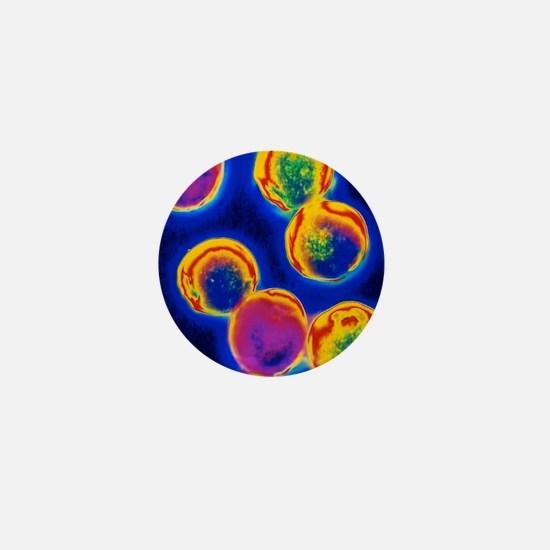 Coloured LM of Halococcus bacteria Mini Button