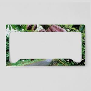 Cocoa pods License Plate Holder