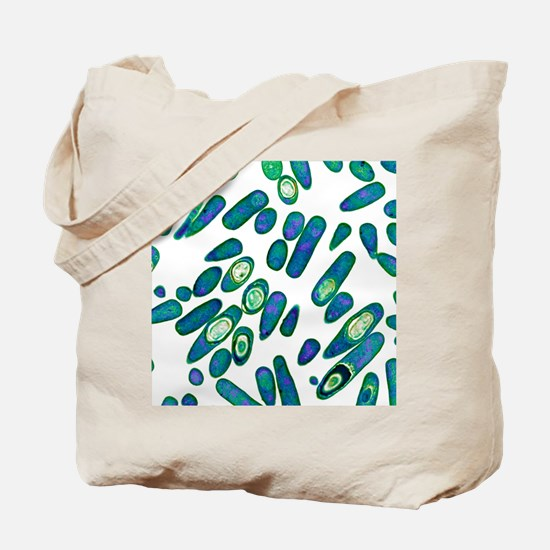 Clostridium difficile bacteria, TEM Tote Bag