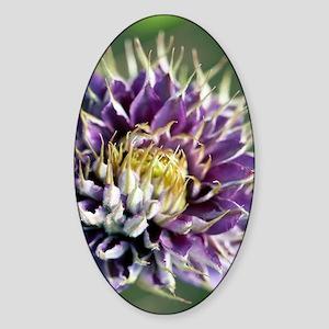 Clematis flower Sticker (Oval)