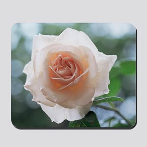 Climbing rose (Rosa 'Penny Lane') Mousepad
