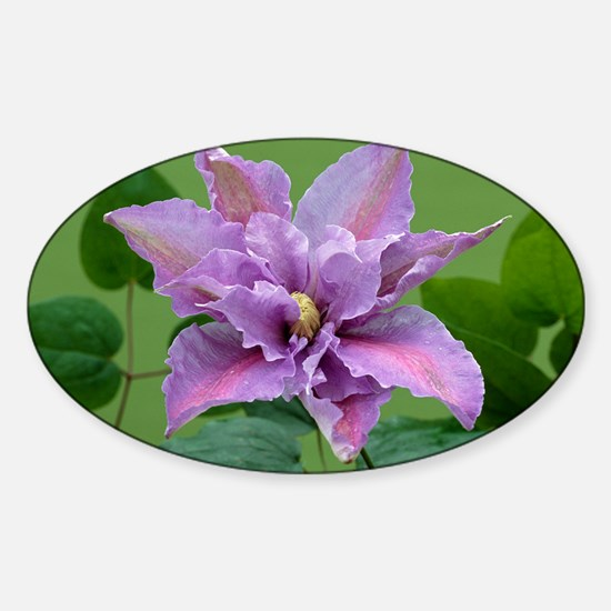 Clematis 'Beate' Sticker (Oval)