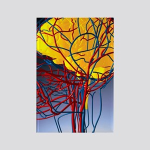 Circulatory system and brain, art Rectangle Magnet