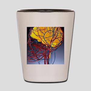 Circulatory system and brain, artwork Shot Glass