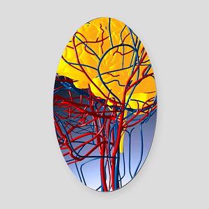 Circulatory system and brain, artw Oval Car Magnet