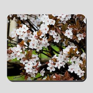Cherry plum blossom (Prunus cerasifera) Mousepad