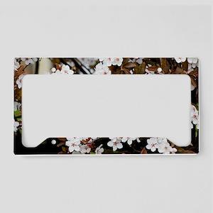 Cherry plum blossom (Prunus c License Plate Holder