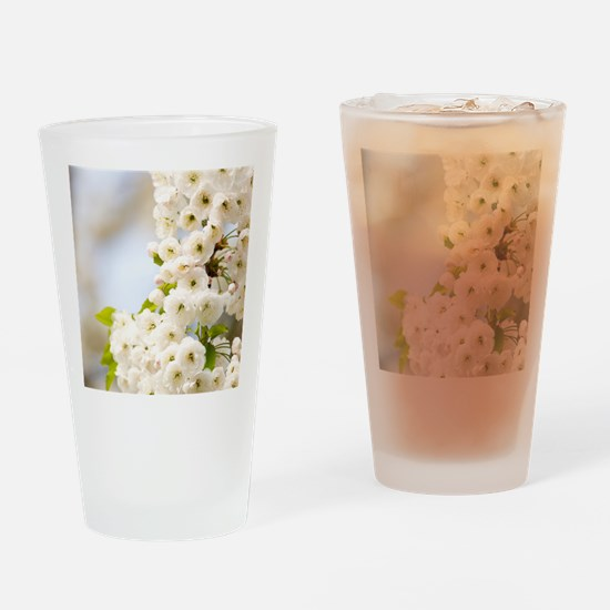 Cherry blossom (Prunus sp.) Drinking Glass