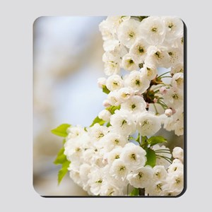 Cherry blossom (Prunus sp.) Mousepad