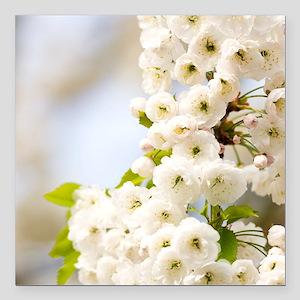 "Cherry blossom (Prunus s Square Car Magnet 3"" x 3"""