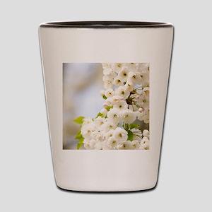 Cherry blossom (Prunus sp.) Shot Glass