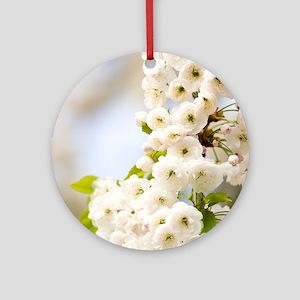 Cherry blossom (Prunus sp.) Round Ornament