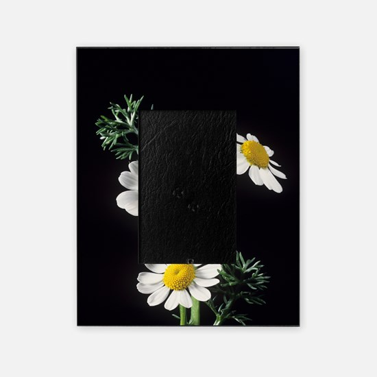 Chamomile flowers Picture Frame