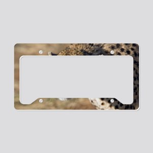 Cheetah License Plate Holder
