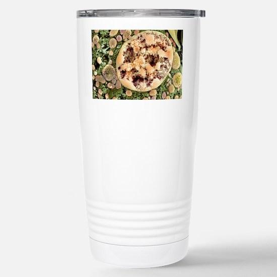 Cell nucleus, SEM Stainless Steel Travel Mug