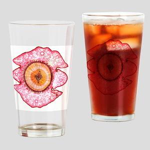Cedar tree stem, light micrograph Drinking Glass