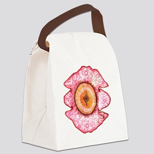 Cedar tree stem, light micrograph Canvas Lunch Bag