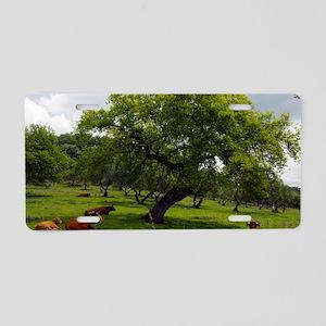 Cattle under a holm oak tre Aluminum License Plate