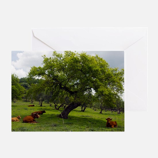 Cattle under a holm oak tree Greeting Card