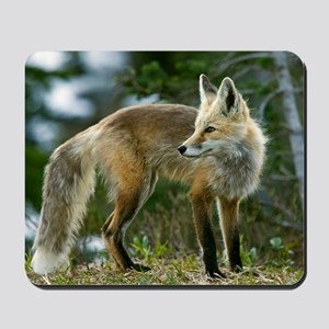 Cascade red fox Mousepad