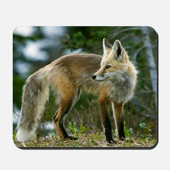 Cascade red fox Mousepad