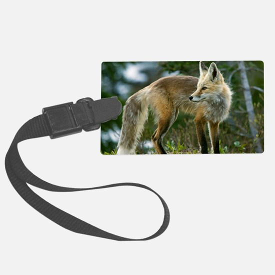 Cascade red fox Luggage Tag