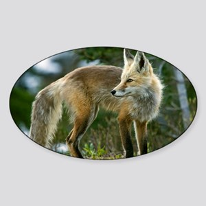 Cascade red fox Sticker (Oval)