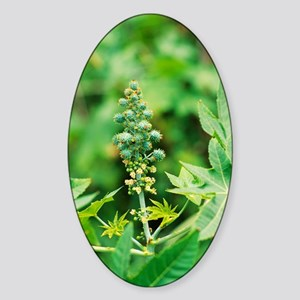 Castor oil plant Sticker (Oval)