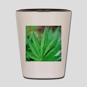 Cannabis leaves Shot Glass