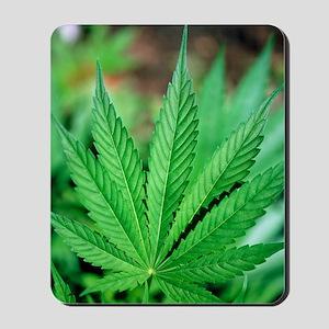 Cannabis leaves Mousepad